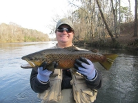 Big Brown Trout #2.jpg