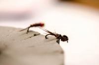 20130207-Fly_Tying-32.jpg