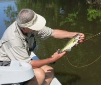 Shoal bass on the lower Flint  River downstream of Albany fishing with Orvis guide Todd Rogers 42613.JPG